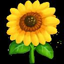 blommasol