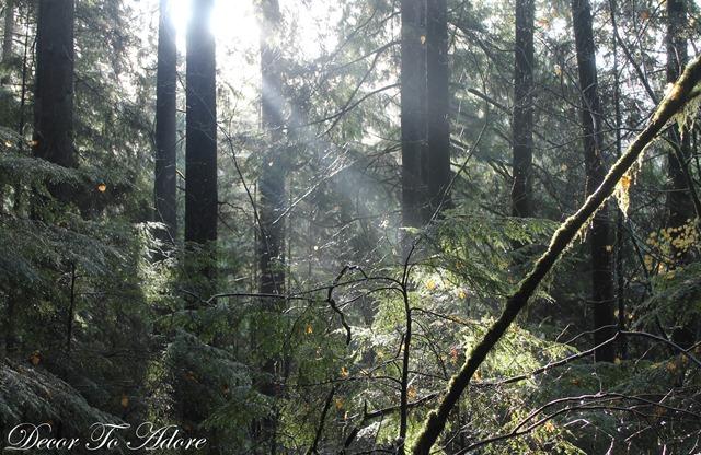 Whistler Lynn Canyon Stanley Park 119