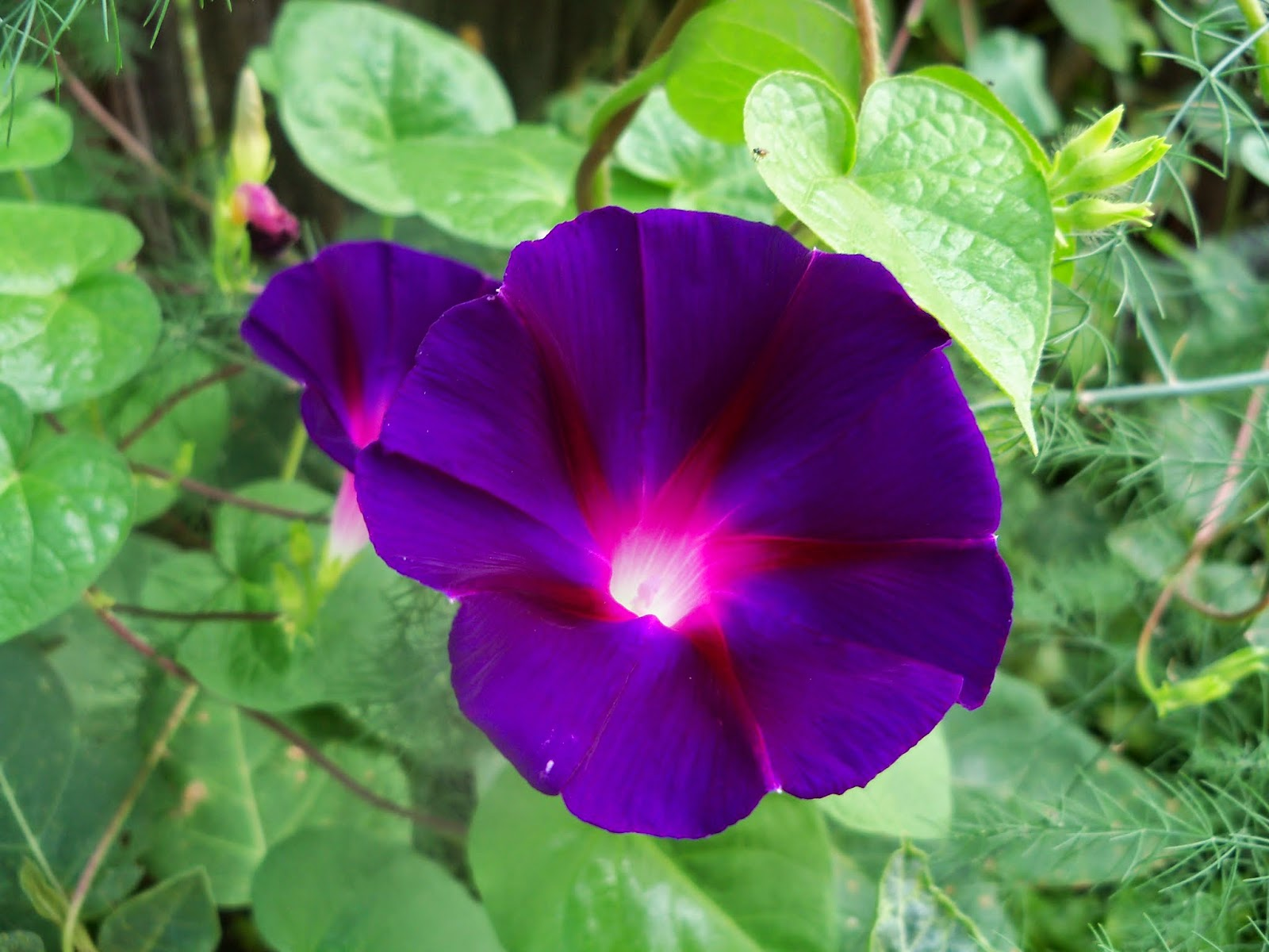 Gardening 2014 - 116_3417.JPG