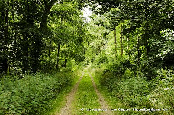 Skovvej i Østerskoven ved Haderslev