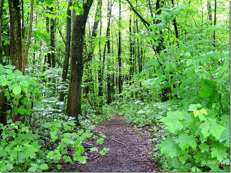 Waldweg in der Au