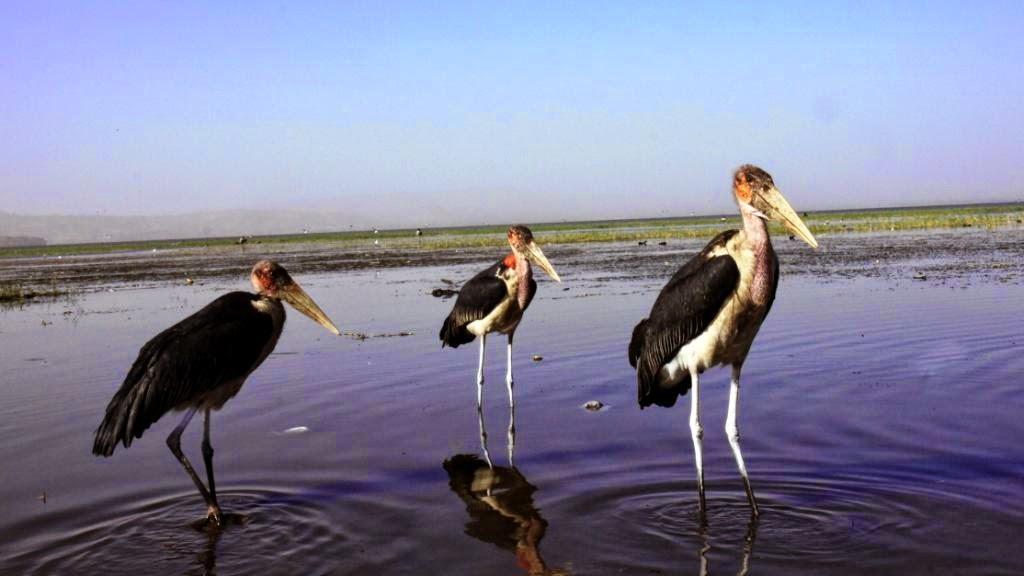 Kelione i Etiopija.Awasos ezeras