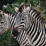 Africa - Livingstone to Nairobi