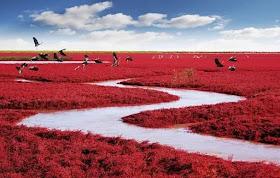 Man Man tour.: Panjin Red Beach ประเทศจีน