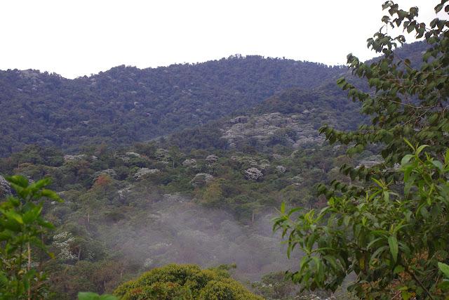 Forêt des nuages, Los Cedros, 1400 m. Montagnes de Toisan, Cordillère de La Plata (Imbabura, Équateur), 19 novembre 2013. Photo : J.-M. Gayman