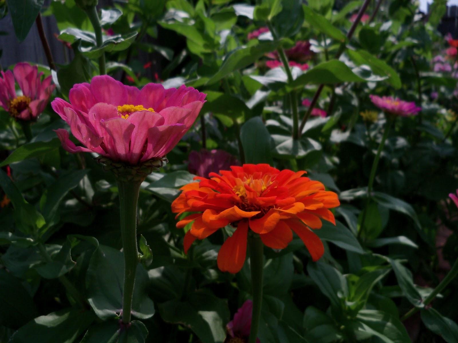 Gardening 2011 - 100_8640.JPG