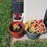 Gardening 2010, Part Two - 101_3433.JPG