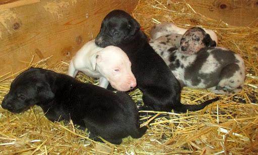 Gemma's babies @ 3 weeks