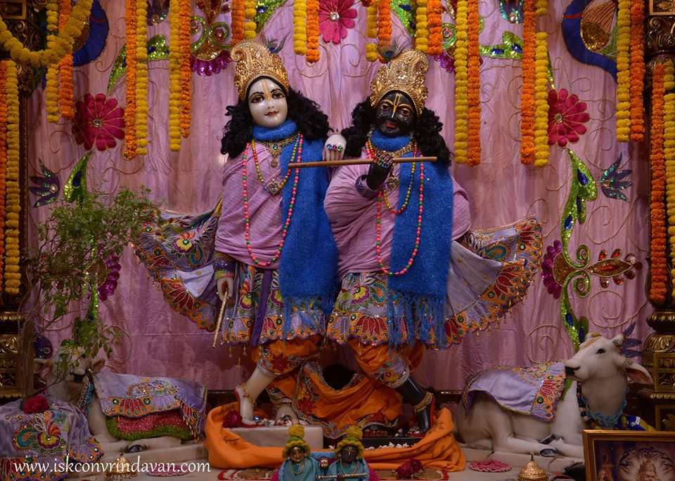 ISKCON Vrindavan Mangla Deity Darshan 16 Jan 2016  (1)