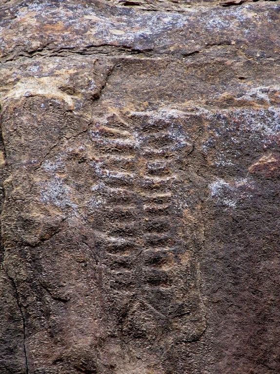 Centipede petroglyph