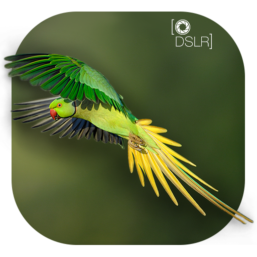 DSLR Camera : Blur Photo Effetcs