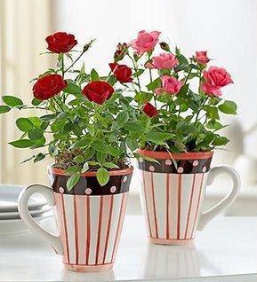 rosinhas plantadas em canecas