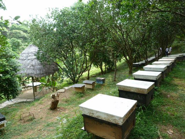 Jouxtant le village de San Jih ,plusieurs hectares privés depuis 5 générations.Pourvu que cela dure