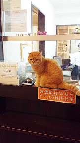You pay by the first hour and then for every 15 minutes thereafter at Calico Cat Cafe. There always seemed to be a cashier cat at the window