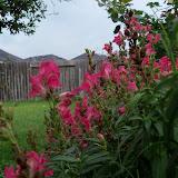 Gardening 2012 - 115_2004.JPG