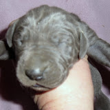 Blue girl w/ white strip on chest @ 1 week