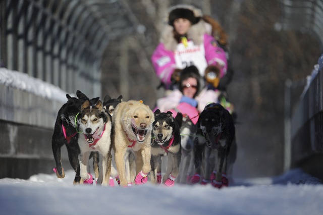 Dee Dee Jonrowe, of Willow, mushes during the ceremonial start of the Iditarod Trail Sled Dog Race in Anchorage, Alaska, Saturday, 4 March 2017. Photo: Michael Dinneen / AP Photo