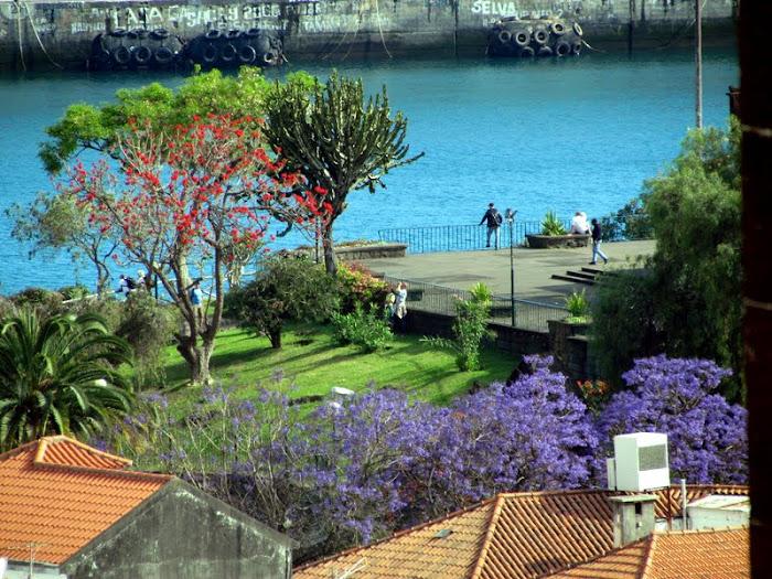 take pictures in Santa Catarina Park