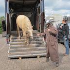 paarden4daagse Zorgvliet 2012 045.jpg