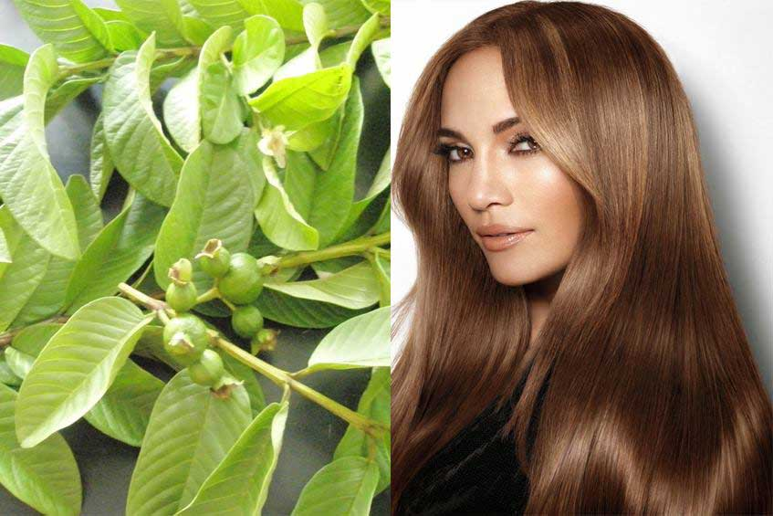 Health Tips: Guava for Hair Growth