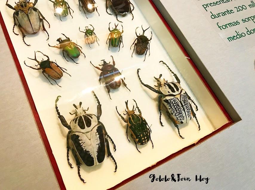 insectpark-centro-naturaleza-insectpark-san-lorenzo-escorial