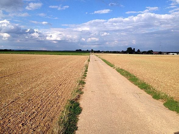 Abgeerntete Felder auf der Obstroute in Rheinhessen