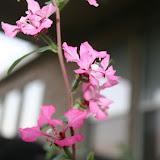 Gardening 2012 - IMG_2766.JPG