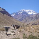 Alcune spedizioni usano i muli per portare cibo e bagagli