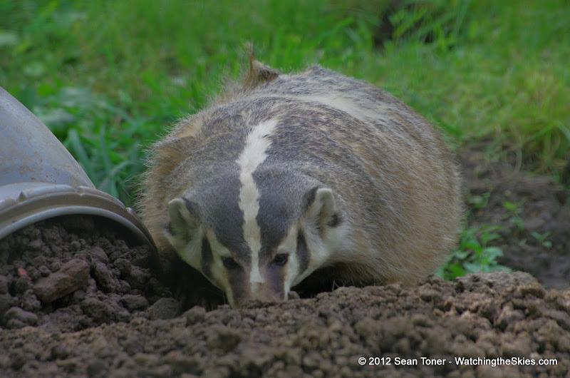 05-11-12 Wildlife Prairie State Park IL - IMGP1625.JPG