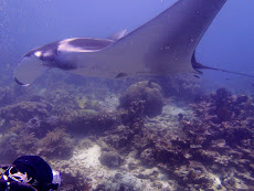 My head and a huge manta- they got so close at times, we had to duck