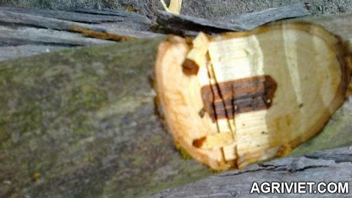 Agriviet.Com-030520142560.jpg