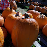 Pumpkin Patch - 115_8234.JPG