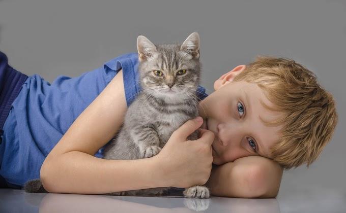 [FBBKolaborasi] Kucing, Menggemaskan Tapi Kadang Menyebalkan