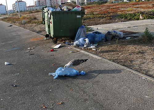 Lixo nas ruas de Peniche