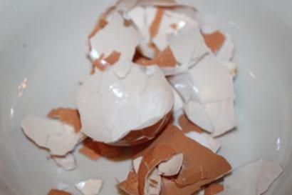 egg-shells-300x200