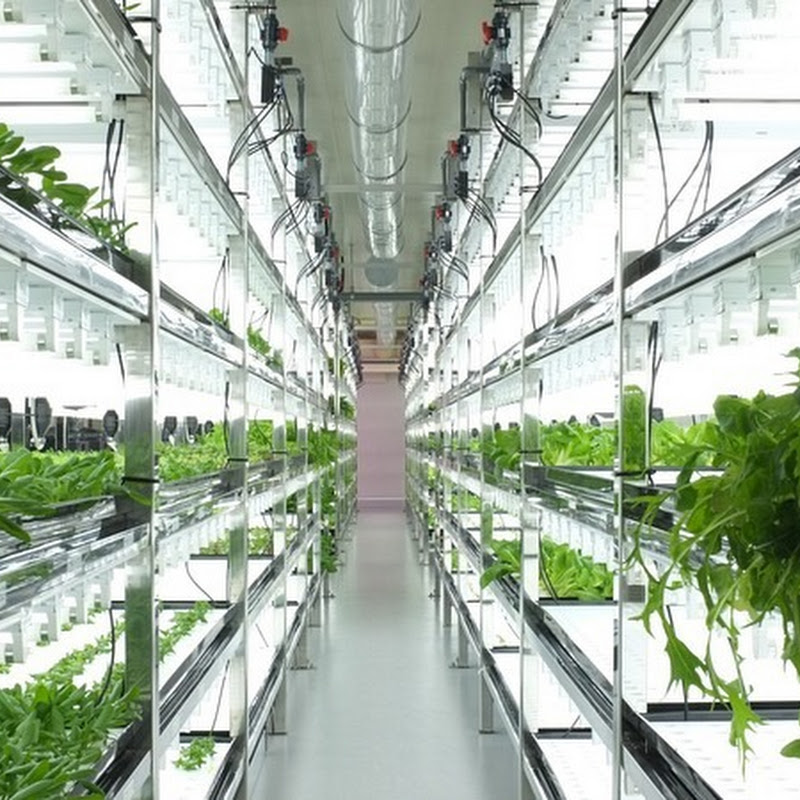 Old Semiconductor Factories Turned Into High-Tech Farms