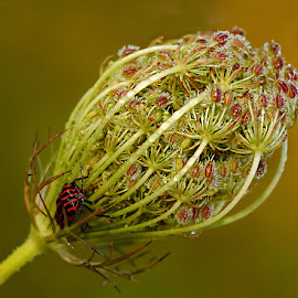 Panet by Gérard CHATENET - Nature Up Close Other plants (  )
