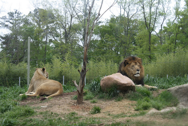 Zoo Snooze 2015 - IMG_7187.JPG