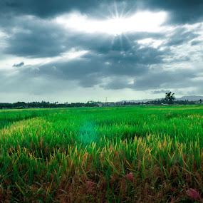Paddy Field by Wei Seong Yan - Landscapes Prairies, Meadows & Fields