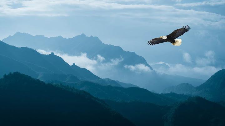 Đại Hãn và chim ưng
