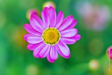 w_2015-05-EOS6D-0436