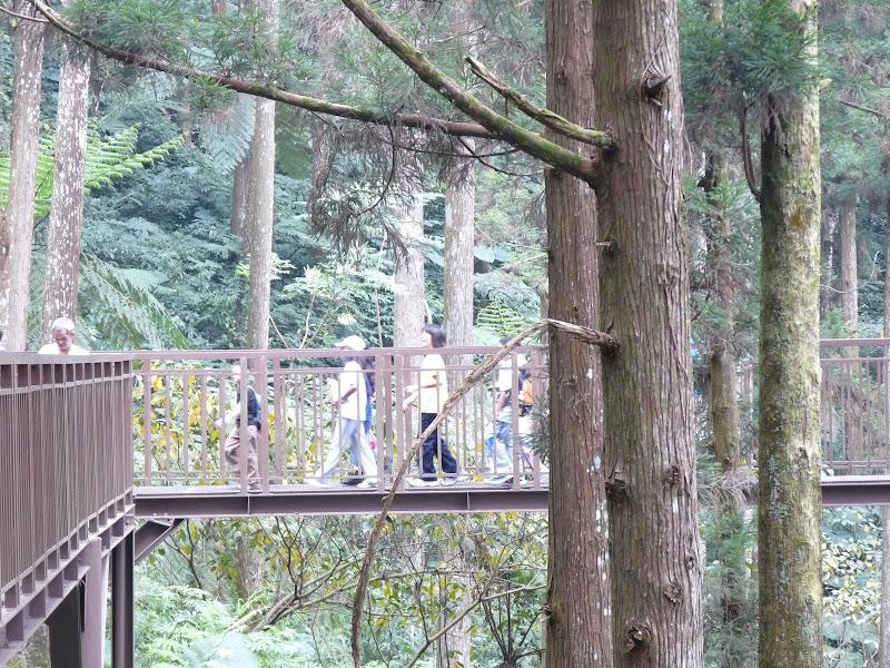 Taiwan.Chi Tou forest. Intelligentes passerelles