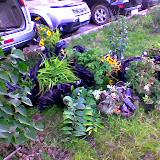 Эльвире Анатольевне из ботанического сада ПГУ за 10 мешков многолетников и цветов для Уинки