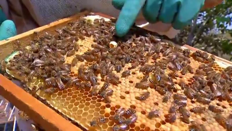 apicultura-deciolandia-1-1024x576