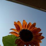Gardening 2011 - 100_9459.JPG