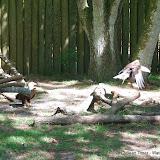 04-07-12 Homosassa Springs State Park - IMGP0060.JPG