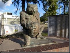 Warialda Wombats?