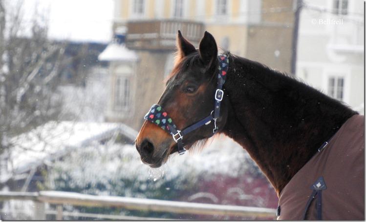 DSCN2748 Pferd