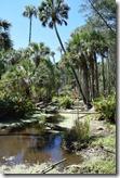 Prehistoric swamp-6