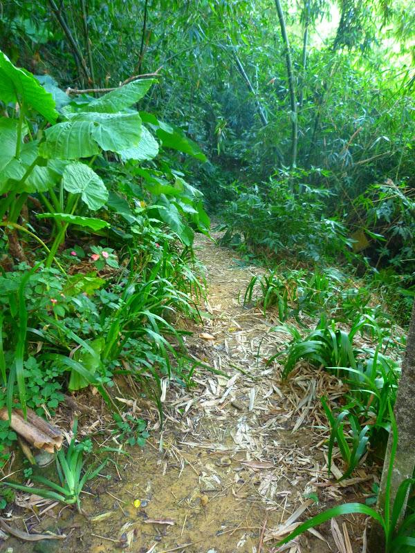 Taipei. Si Shou shan, en plein coeur de Taipei. Accès par un autre chemin moins emprunté. - P1240868.JPG